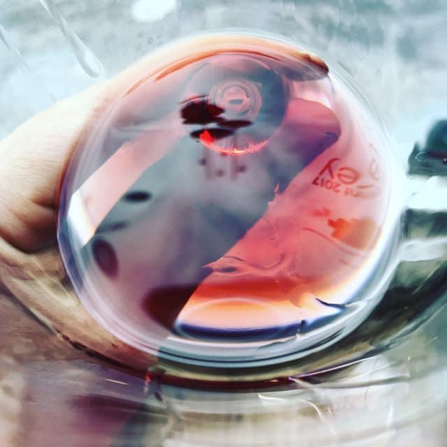 Gros plan sur un verre de vin rouge en transparence.